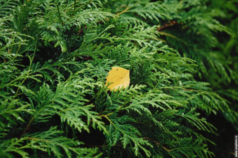 Желтый осенний лист на зеленом фоне